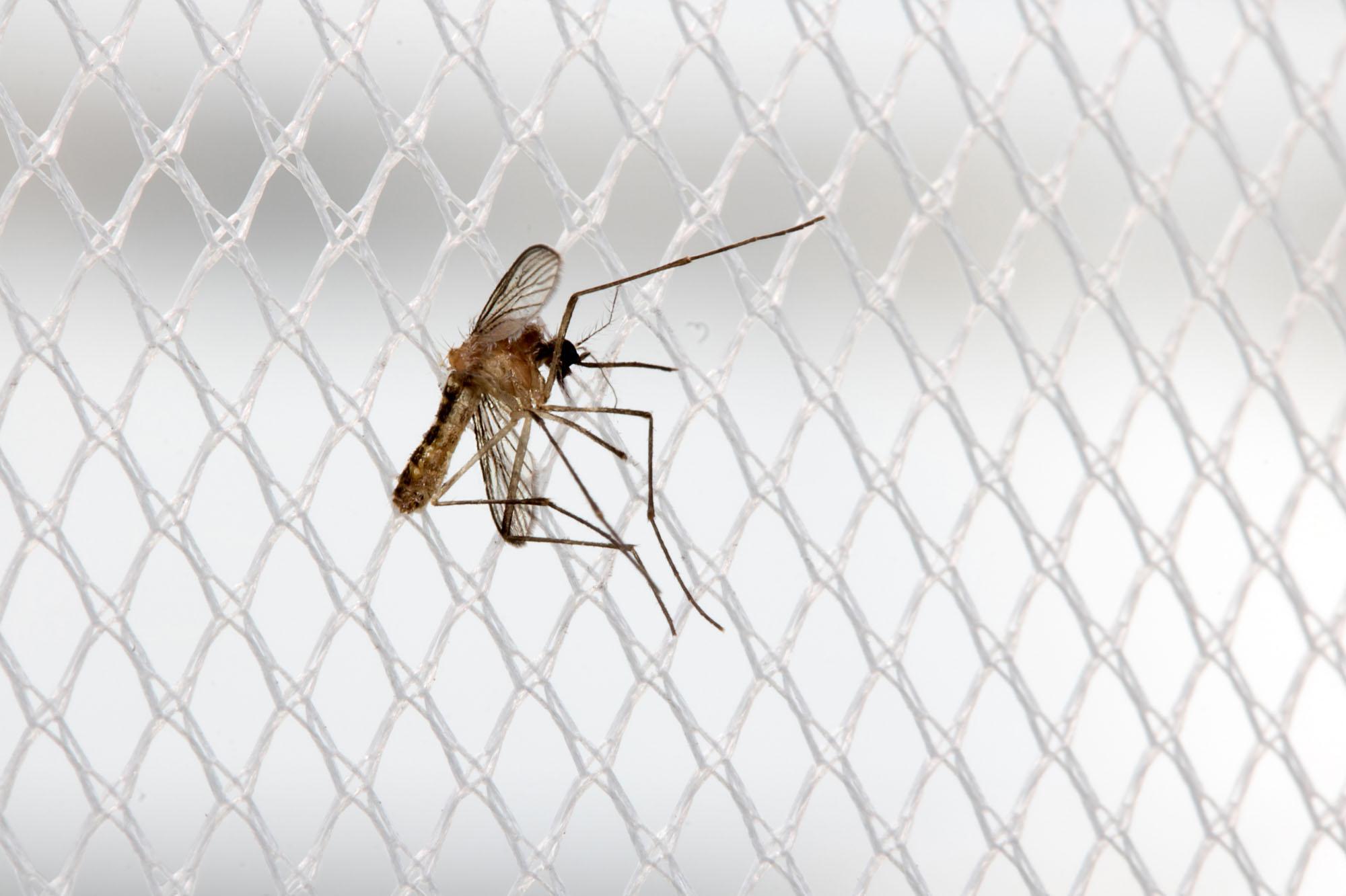 Insektenschutz für [page_title]